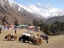 Everest 2015: Trek to Everest Base Camp Begins