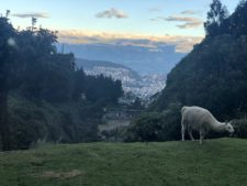 Ecuador 2019: Climbing the Volcanoes: Quito