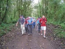 Kilimanjaro's Rain Forest